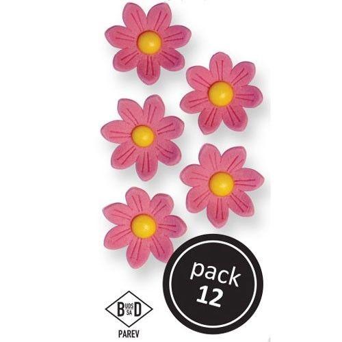 PME Spiselige blomster Rosa tusenfryd pk/12